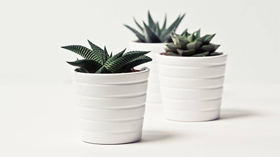 GLASSES & PLANT